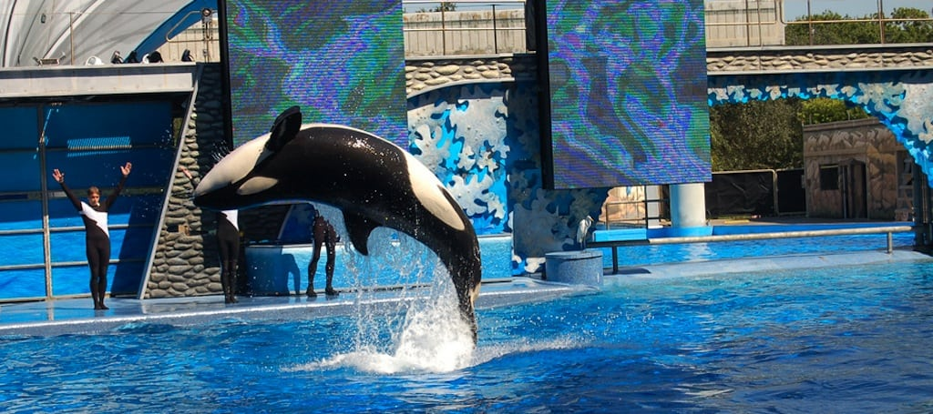 Blackstone will still control SeaWorld's 60,000 fish after the IPO