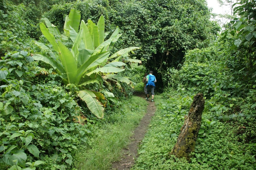 Tourists trek the highest mountain range in Uganda, a common side trip for those staying in Rwanda.