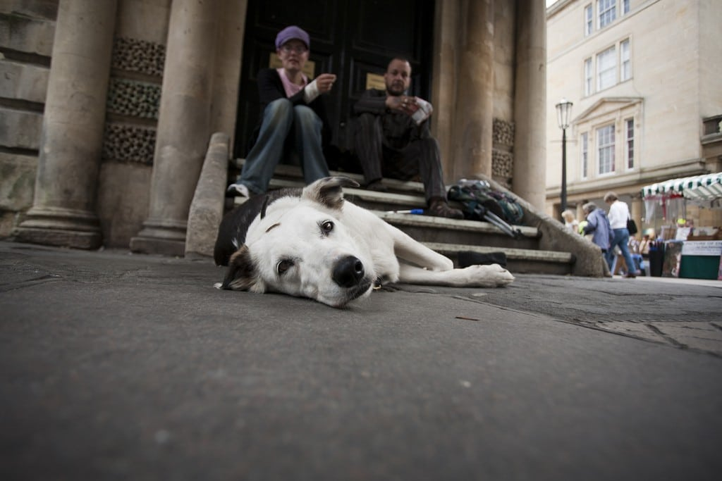 This street dog lives among the homeless in Bath.