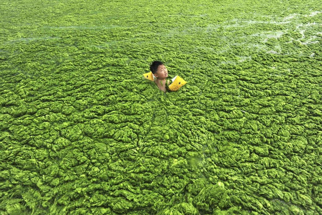 Sea of green algae off the Chinese coast isn't as bad for tourism as you'd think