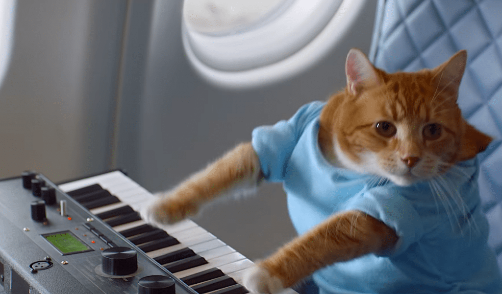 A cat is the only fitting start to Delta's meme-filled safety video.