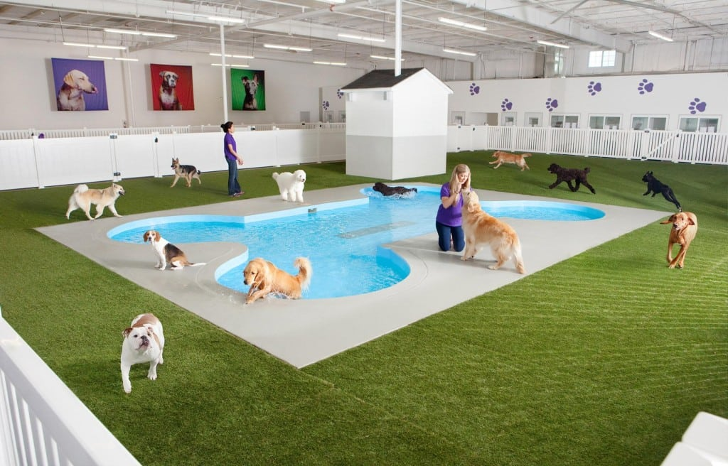 Pets Will Stay in Luxury at New JFK Terminal