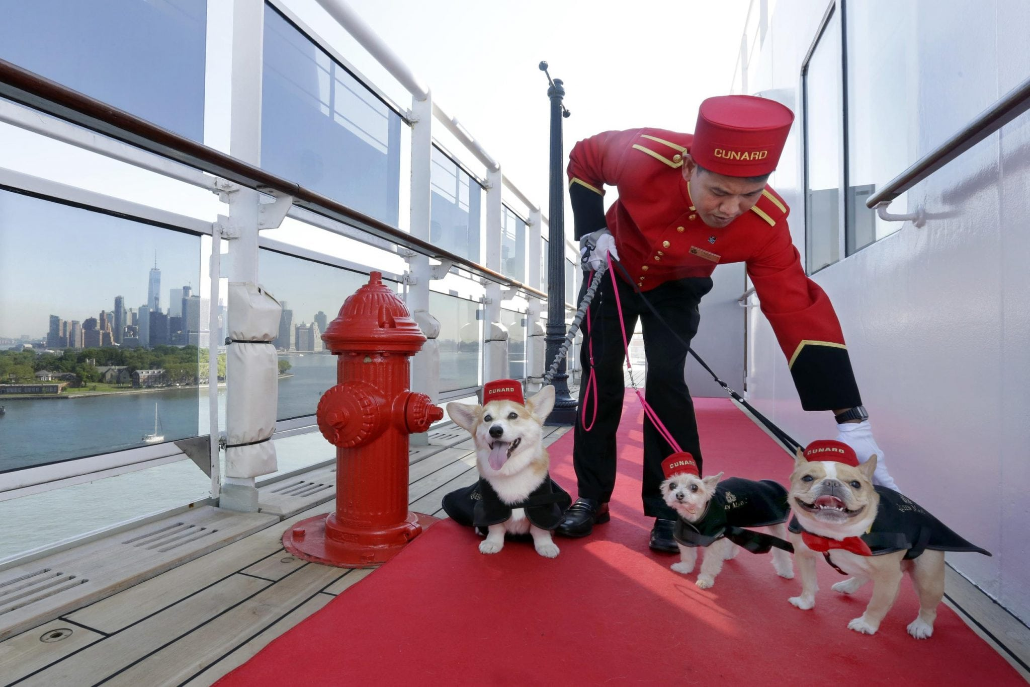queen mary 2 debuts staterooms for solo travelers and expands kennels  u2013 skift