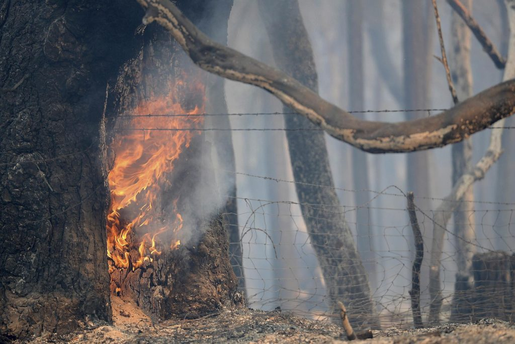 A tree continues to burn from a wildfire along Lumpkin Road near Oroville, California August 30, 2017. The wildfire is among a series of wildfires burning across the U.S. West.