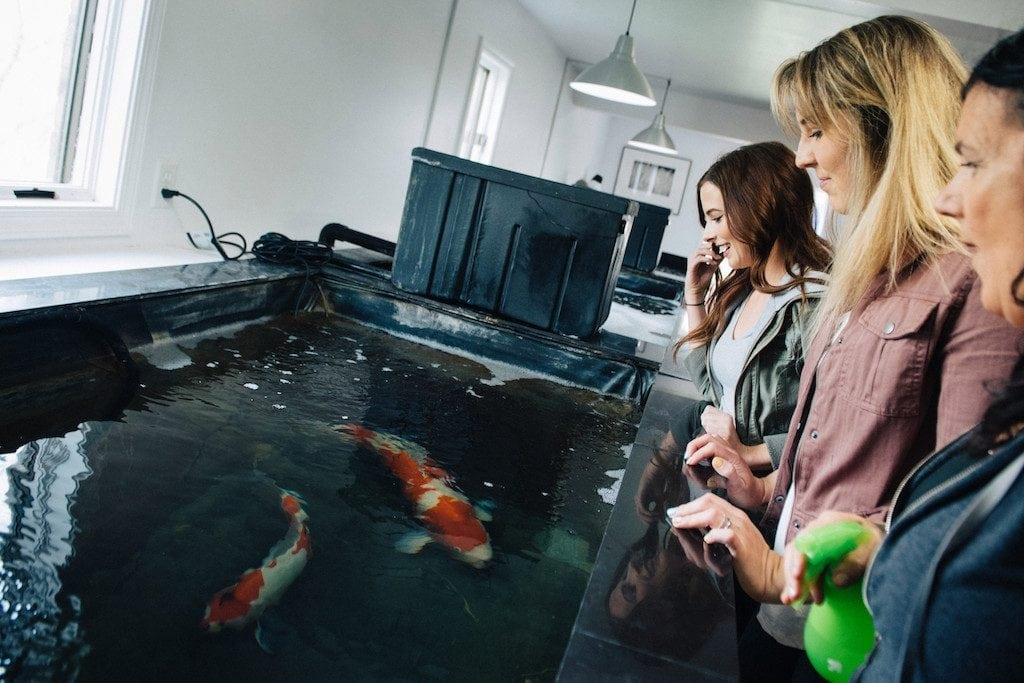 A promotional image for the Koi Keeper experience offered by Airbnb.